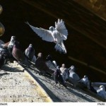 کبوتر حرم-خاطرات خدمت در حرم امامرضا علیهالسلام-روزیِ اول صبح