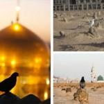 کبوتر حرم-خاطرات خدمت در حرم امامرضا علیهالسلام-آرزو