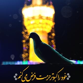 کبوتر حرم-خاطرات خدمت در حرم امامرضا علیهالسلام-خادم غافل