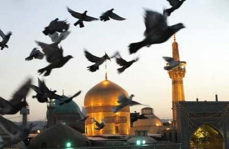 کبوتر حرم-علّاف اهلبیت-حرم امامرضا علیهالسلام