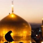 کبوتر حرم امامرضا علیهالسلام