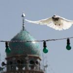 کبوتر حرم-خاطرات خدمت در حرم امامرضا علیهالسلام-سعادتآباد