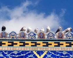 کبوتر حرم-خاطرات خدمت در حرم امامرضا علیهالسلام-کبوتربارون
