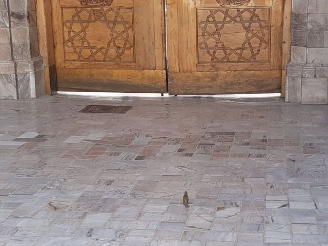 کبوتر حرم-خاطرات خدمت افتخاری در حرم امامرضا علیهالسلام-گنجشکروزی